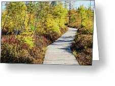 The Boardwalk At Mer Bleue. Greeting Card by Rob Huntley
