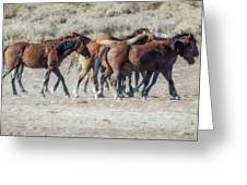 The Boys In The Band, No. 2 Greeting Card by Belinda Greb
