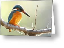 The Common Kingfisher Alcedo Greeting Card