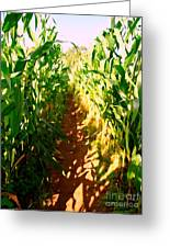 The Corn Maze #2 Greeting Card