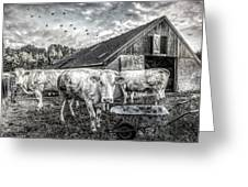 The Cows Came Home Black And White Greeting Card