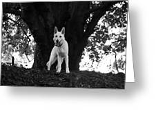 The Dog And The Tree Greeting Card