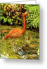 The Flamingo Greeting Card