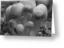 The Funghi Family Greeting Card