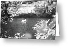 The Lone Swan 1 Greeting Card by Brian Hale
