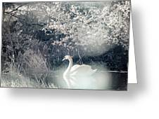 The Lone Swan 2 Greeting Card by Brian Hale