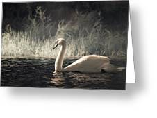 The Lone Swan 3 Greeting Card by Brian Hale