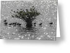 The Mangrove Greeting Card