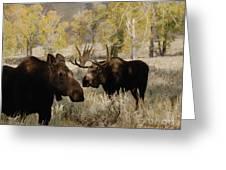 The Moose Rut Greeting Card