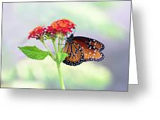 The Queen Of Butterflies  Greeting Card