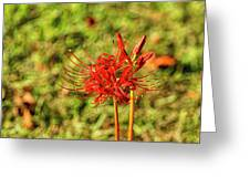 The Spider Lily Greeting Card