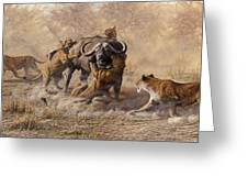 The Take Down - Lions Attacking Cape Buffalo Greeting Card by Alan M Hunt