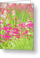 The World Laughs In Flowers - Primula Greeting Card