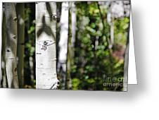 Through The Aspen Forest Greeting Card