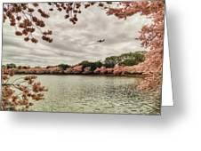 Tidal Basin Blossoms Greeting Card