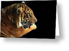 Tiger On Black Greeting Card by Alison Frank