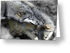 Timber Wolves Up Close Greeting Card
