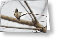 Titmouse Pull-ups Greeting Card