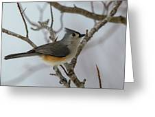 Titmouse Winter Morning Cutie  Greeting Card
