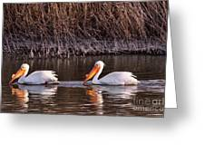 To Pelicans Trolling For Fish Greeting Card