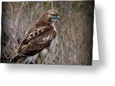 Totem Animal Book Hawk Greeting Card