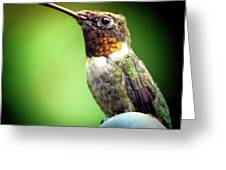 Totem Animal Book Hummingbird Greeting Card