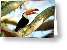 Toucan On A Tree Greeting Card