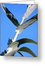 Towering Big Long Leaves Greeting Card