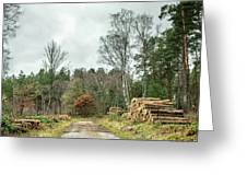 Track Through The Wood Greeting Card by Nick Bywater