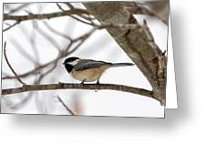 Tranquil Winter Chickadee Greeting Card