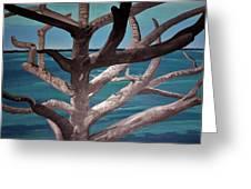 Tree And Beach Greeting Card