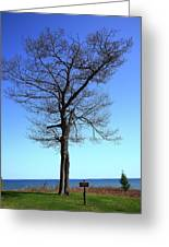 Tree And Great Lake Greeting Card