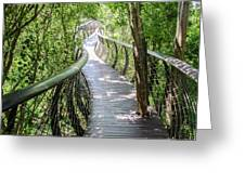 Tree Canopy Walkway At Kirstenbosch National Botanical Garden Greeting Card by Rob Huntley