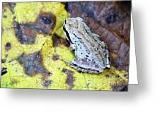 Tree Frog On Yellow Leaf Greeting Card
