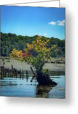 Tree In Mallows Bay Greeting Card