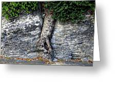 Tree In Stone Greeting Card