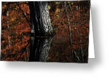 Tree Reflects In The Pond Greeting Card