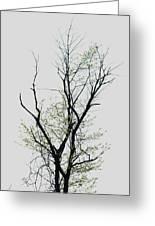 Tree Series Five Greeting Card