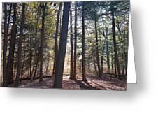 Trees And Shadows  Greeting Card