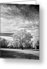 Trees In Florida Greeting Card