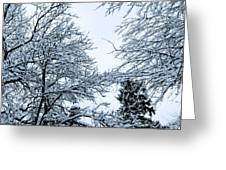 Trees With Snow Greeting Card