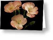 Trio In Pink Greeting Card