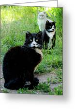 Trio In The Grass Greeting Card