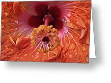Tropical Hibiscus Greeting Card