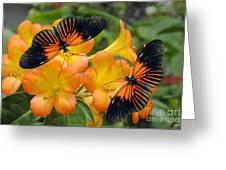 Tropical Rhododendron Simbu Sunset Greeting Card