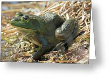 True Frog Greeting Card by Sally Sperry
