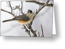 Tufted Titmouse Winter Tranquility Greeting Card