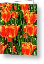 Tulips 2019d Greeting Card