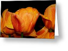Tulips On A Black Background Greeting Card