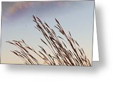 Turkey Foot Grass At Sunset Greeting Card